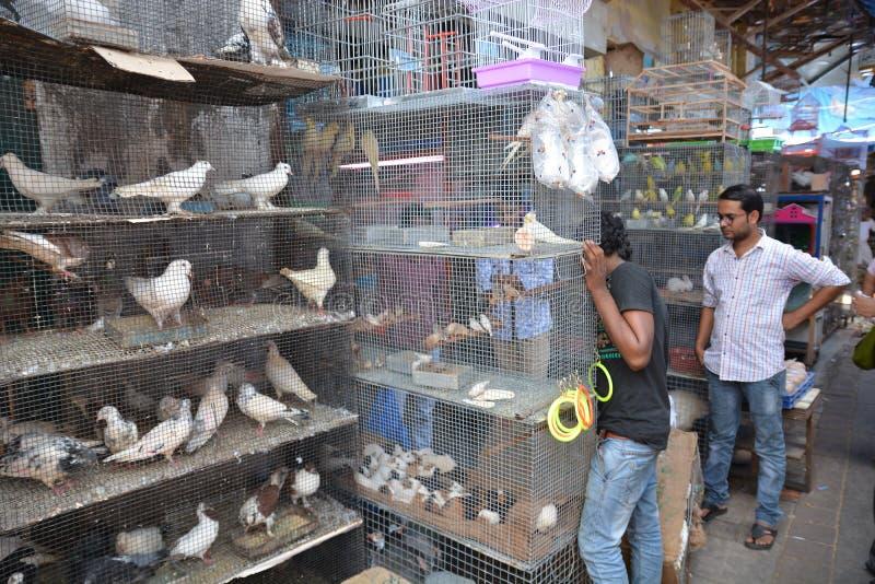 Ινδική αγορά πουλιών στοκ εικόνες