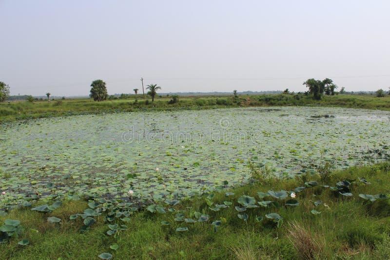 Ινδική επαρχία στοκ εικόνες με δικαίωμα ελεύθερης χρήσης