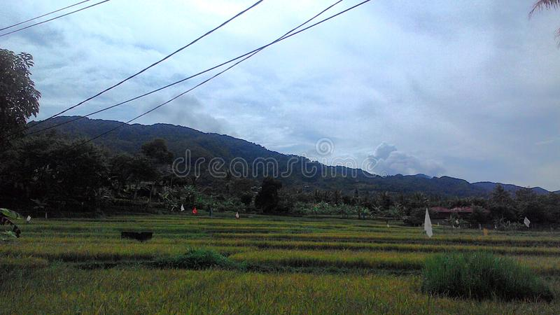 Ινδονησιακό ricefield στοκ φωτογραφία με δικαίωμα ελεύθερης χρήσης