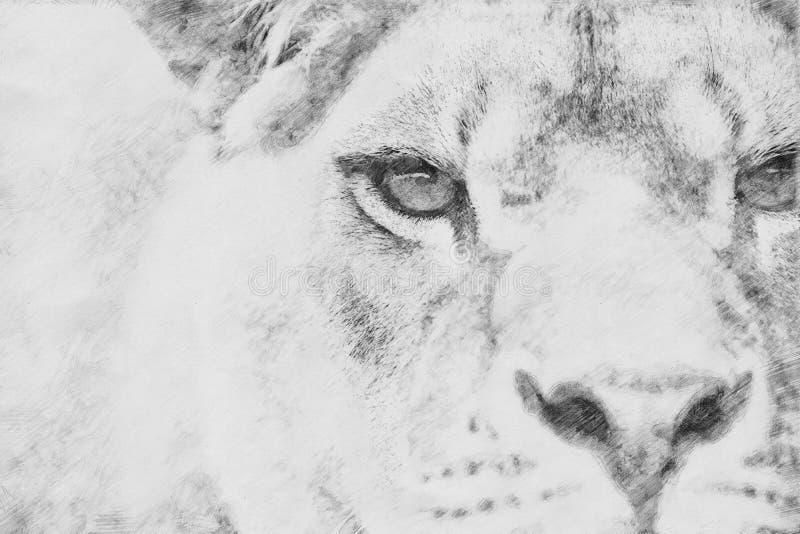 λιοντάρι Σκίτσο με το μολύβι διανυσματική απεικόνιση