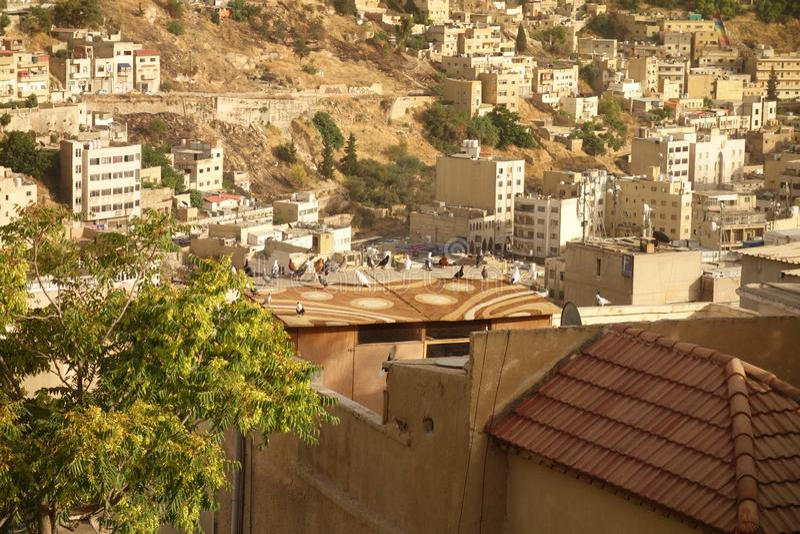 Ιορδανικά περιστέρια στοκ φωτογραφία με δικαίωμα ελεύθερης χρήσης