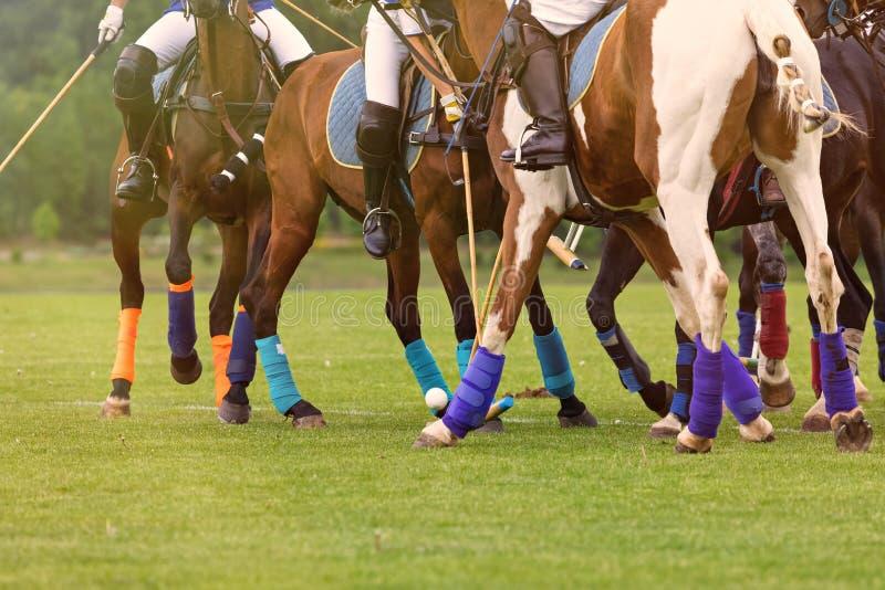 Ιππείς σε άλογα τη στιγμή της έναρξης του παιχνιδιού της ιπποδρομίας Ένεση με σφαίρα Πολλά πόδια αλόγων με προστατευτικές δέσμες στοκ εικόνα με δικαίωμα ελεύθερης χρήσης