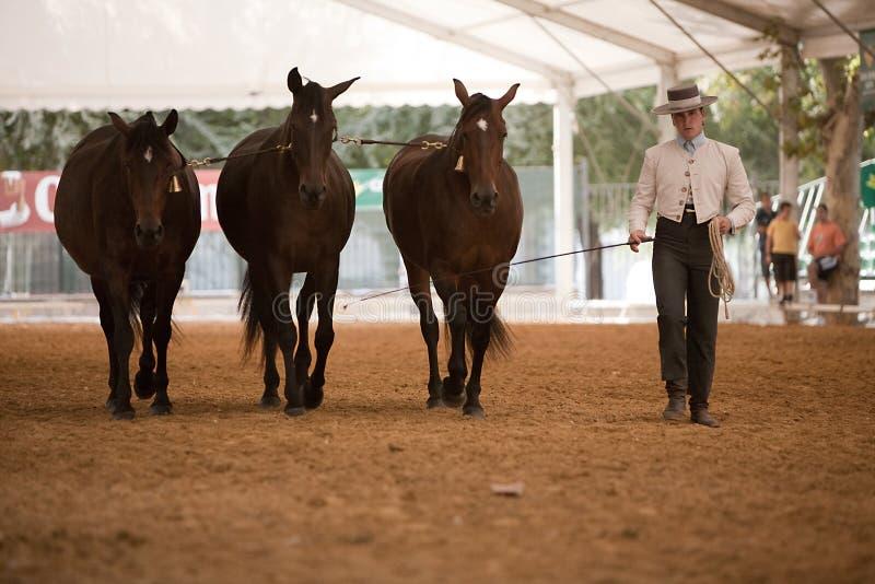 Ιππική λειτουργία δοκιμής με 3 καθαρά ισπανικά άλογα στοκ φωτογραφία με δικαίωμα ελεύθερης χρήσης