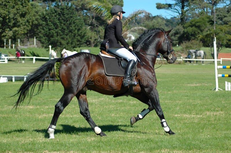 ιππικός αθλητισμός στοκ εικόνες