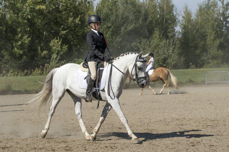 Ιππικός - εκπαιδευτικός στοκ εικόνες