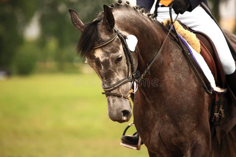 ιππικός στοκ φωτογραφία με δικαίωμα ελεύθερης χρήσης