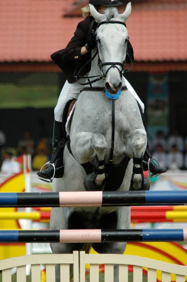 ιππικός στοκ φωτογραφία