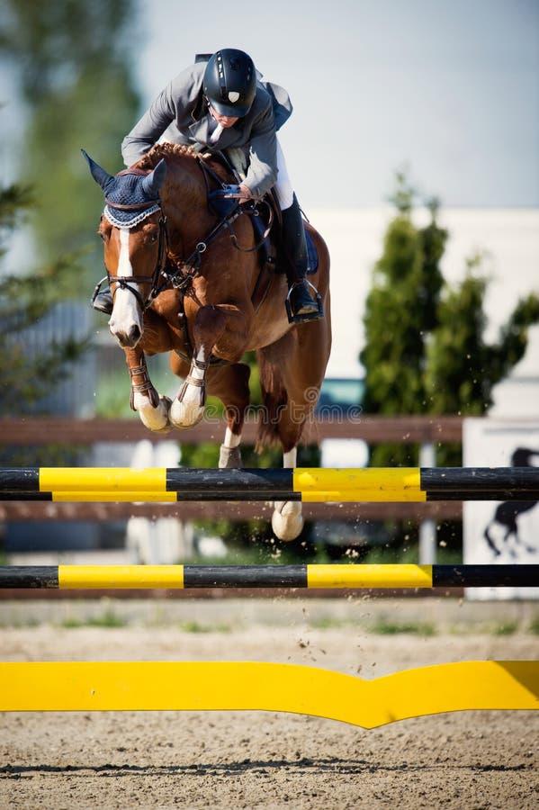 Ιππικό άλμα αναβατών αλόγων Η εικόνα που παρουσιάζει έναν ανταγωνιστή που αποδίδει παρουσιάζει πηδώντας ανταγωνισμό στοκ εικόνες