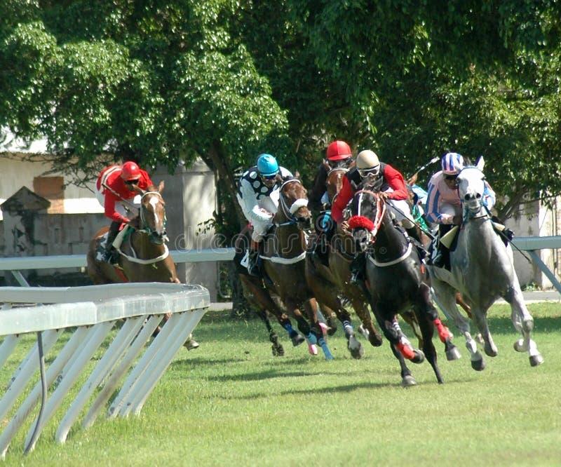Download ιππόδρομος στοκ εικόνα. εικόνα από αθλητισμός, άλογα, στοιχηματίζοντας - 113529