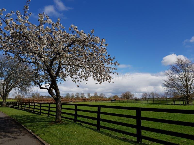 Ιρλανδικό εθνικό πάρκο στηριγμάτων στοκ φωτογραφία με δικαίωμα ελεύθερης χρήσης