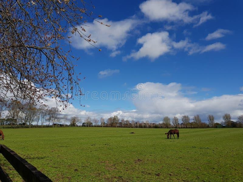 Ιρλανδικό εθνικό πάρκο στηριγμάτων στοκ φωτογραφίες με δικαίωμα ελεύθερης χρήσης