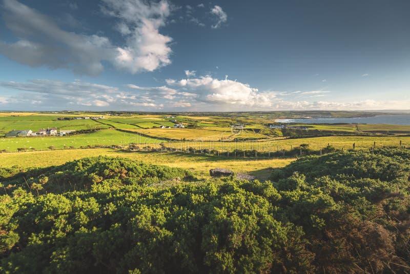 Ιρλανδικό τοπίο επαρχίας Τα δέντρα, λιβάδια στοκ εικόνες με δικαίωμα ελεύθερης χρήσης