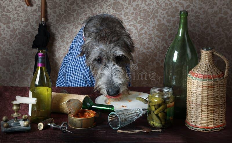 Ιρλανδικό σκυλί wolfhound στον πίνακα στοκ φωτογραφίες με δικαίωμα ελεύθερης χρήσης