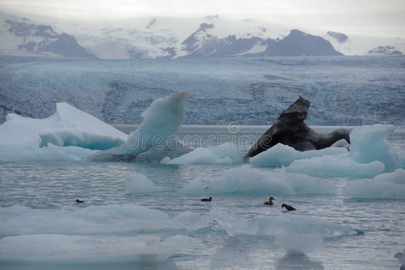 Ισλανδία δύο μαύρο και ανοικτό μπλε παγόβουνο στη λιμνοθάλασσα Jökulsarlon στοκ εικόνες