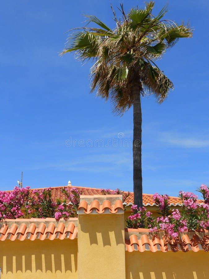 Ισπανικός τοίχος φοινίκων και κήπων στοκ εικόνες με δικαίωμα ελεύθερης χρήσης