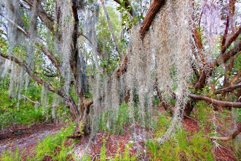 Ισπανικό εθνικό πάρκο Everglades βρύου στοκ εικόνες