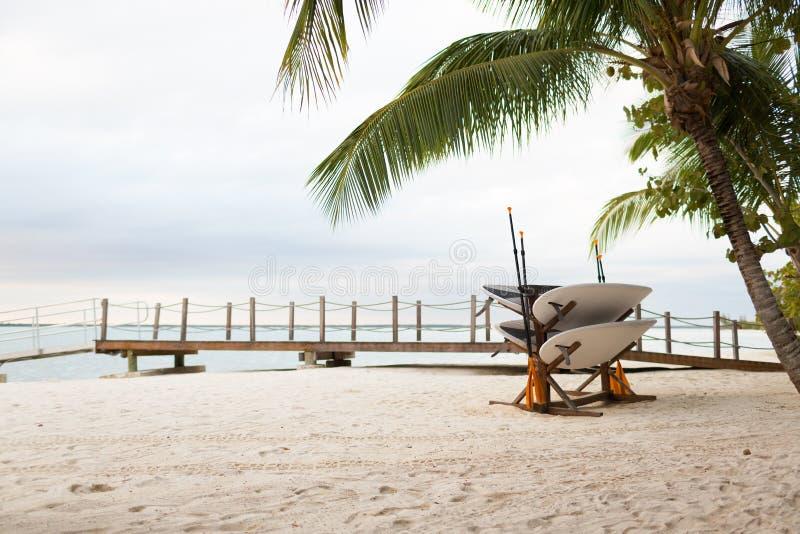 Ιστιοσανίδες στην τροπική παραλία στοκ εικόνα