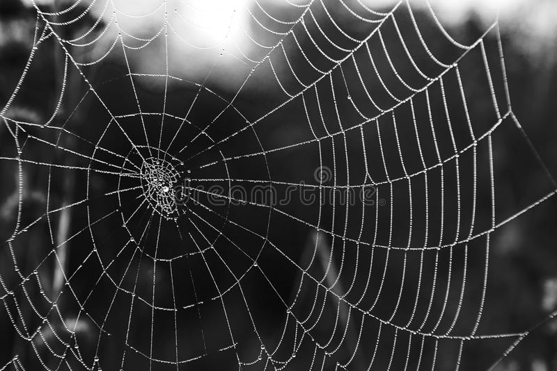 Ιστοί αράχνης με τη δροσιά στοκ εικόνα με δικαίωμα ελεύθερης χρήσης
