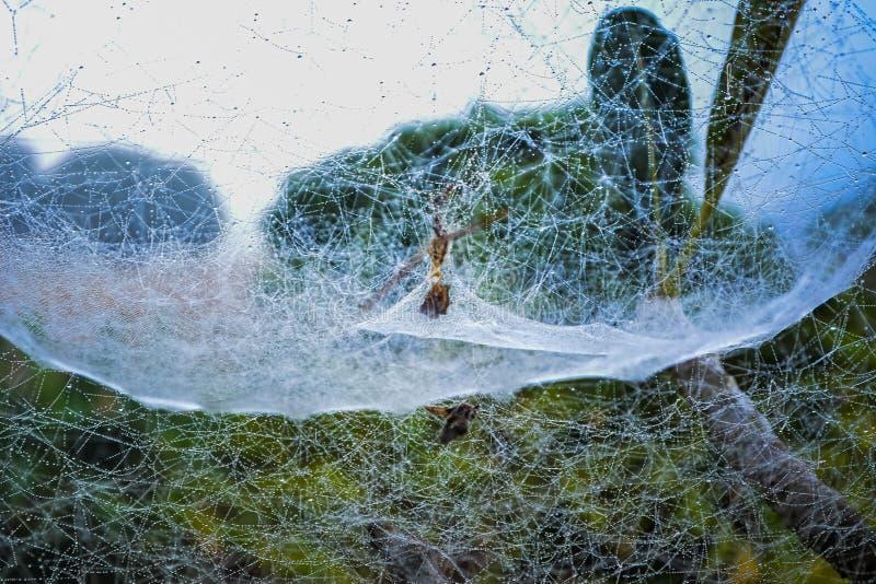 Ιστοί αράχνης στα δέντρα στοκ φωτογραφία