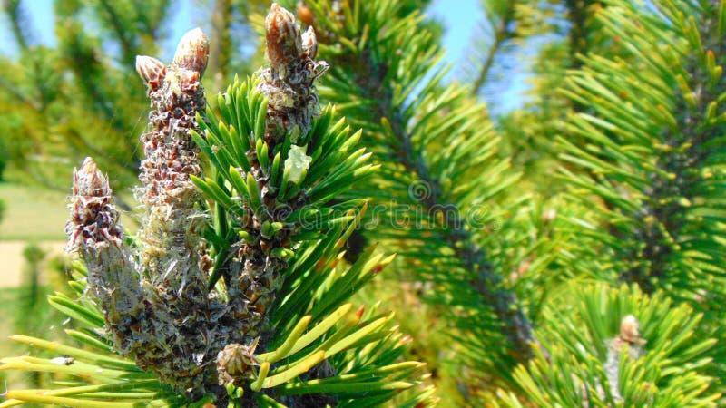 Ιστοί αράχνης στις ερυθρελάτες στοκ φωτογραφίες με δικαίωμα ελεύθερης χρήσης