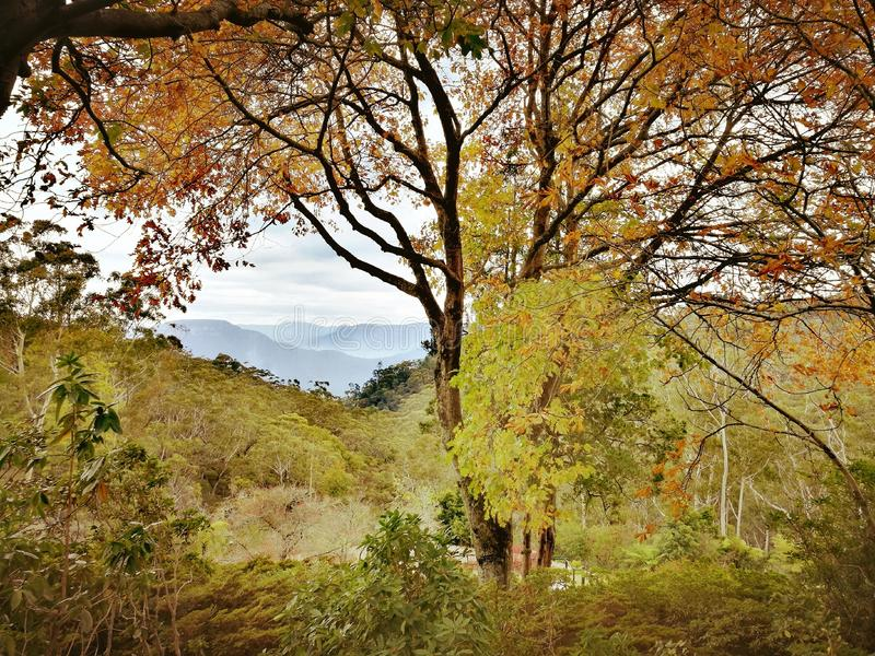 Ιστορικοί σπίτι Everglades και κήποι, Leura, μπλε βουνά, Αυστραλία στοκ φωτογραφία με δικαίωμα ελεύθερης χρήσης