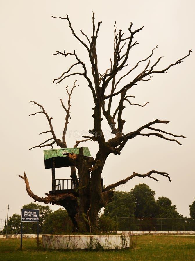 Ιστορικό δέντρο στοκ εικόνες με δικαίωμα ελεύθερης χρήσης