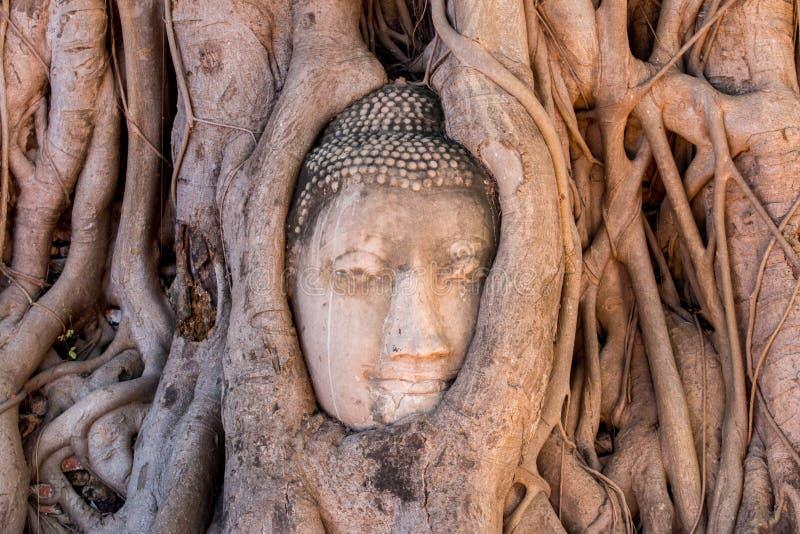 ιστορικό πάρκο ayutthaya στοκ φωτογραφίες με δικαίωμα ελεύθερης χρήσης