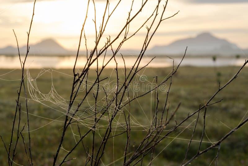 Ιστός ή ιστός αράχνης αραχνών με τις πτώσεις νερού μετά από τη βροχή στ στοκ φωτογραφία με δικαίωμα ελεύθερης χρήσης