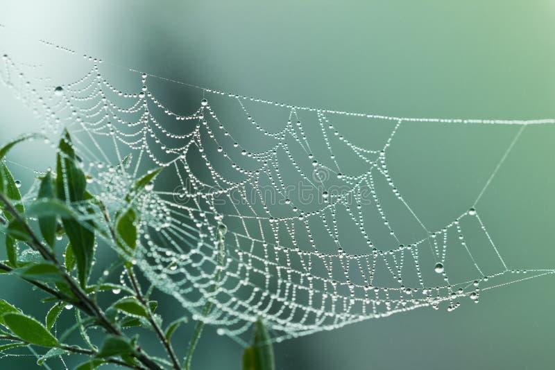 Ιστός ή ιστός αράχνης αραχνών με τις πτώσεις νερού στοκ εικόνα με δικαίωμα ελεύθερης χρήσης