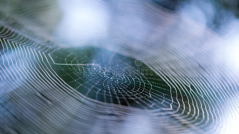 Ιστός ή ιστός αράχνης αραχνών στα ξημερώματα με τις πτώσεις νερού στοκ φωτογραφίες
