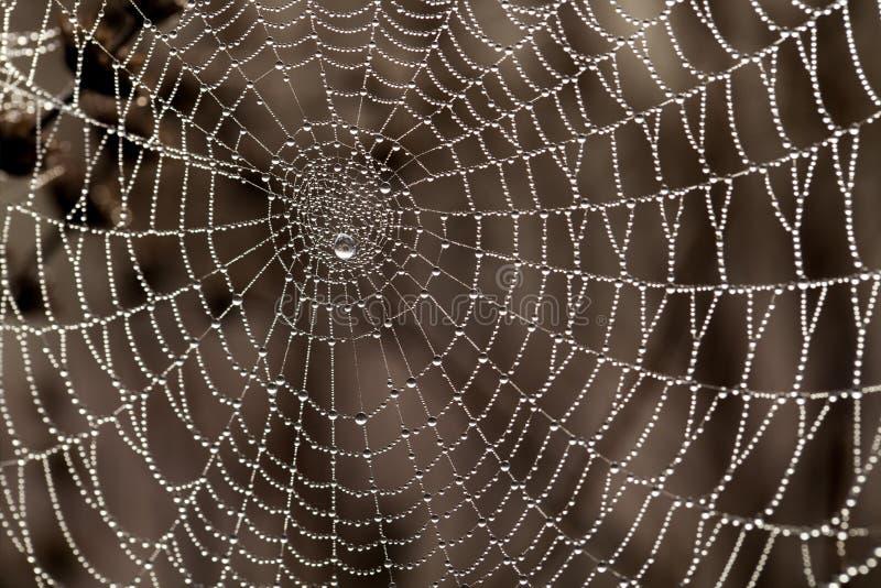 Ιστός αράχνης με τις απελευθερώσεις δροσιάς στοκ φωτογραφία με δικαίωμα ελεύθερης χρήσης