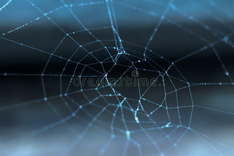 Ιστός αράχνης με τις απελευθερώσεις δροσιάς στοκ εικόνες