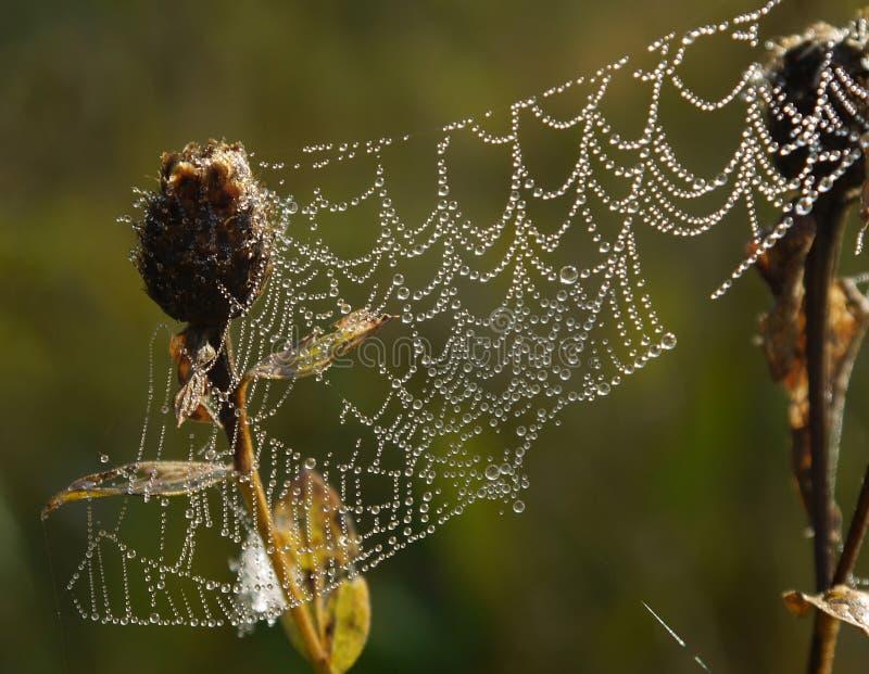Ιστός αράχνης με τις δροσοσταλίδες στοκ εικόνα με δικαίωμα ελεύθερης χρήσης