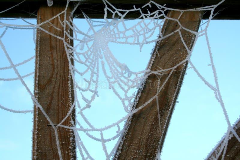 ιστός αράχνης 2 στοκ φωτογραφία με δικαίωμα ελεύθερης χρήσης