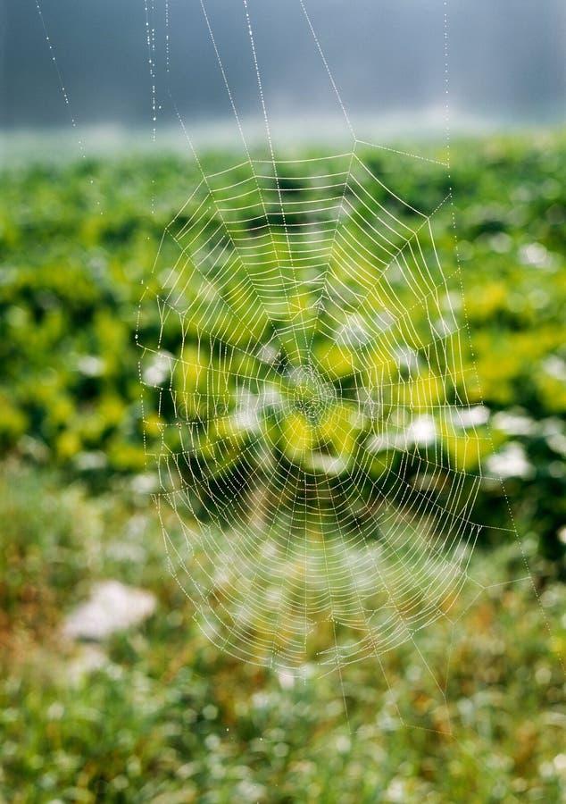 Ιστός αραχνών με τη δροσιά στοκ φωτογραφίες