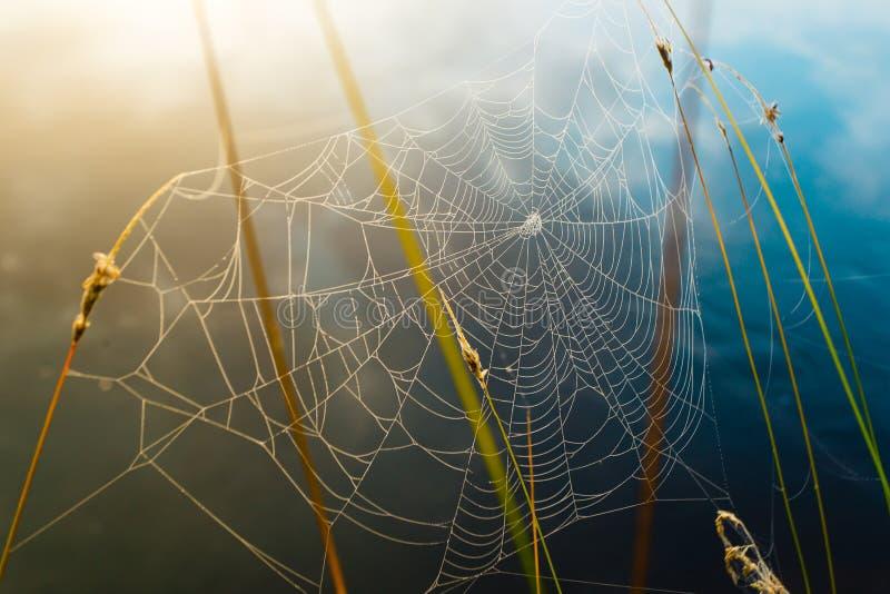 Ιστός αραχνών που καλύπτεται στις πτώσεις δροσιάς, ζωηρόχρωμο υπόβαθρο στοκ εικόνες με δικαίωμα ελεύθερης χρήσης