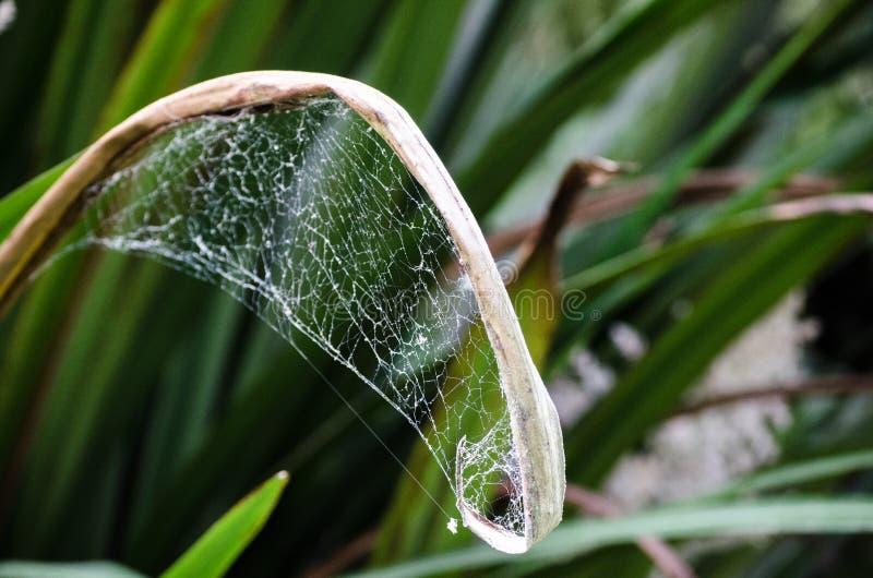 Ιστός αραχνών στο μακρύ φυτό φύλλων σε έναν βοτανικό κήπο στοκ εικόνα
