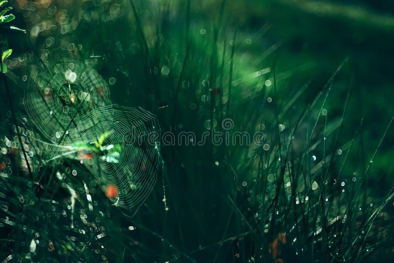 Ιστός και χλόη στη δροσιά στοκ φωτογραφίες