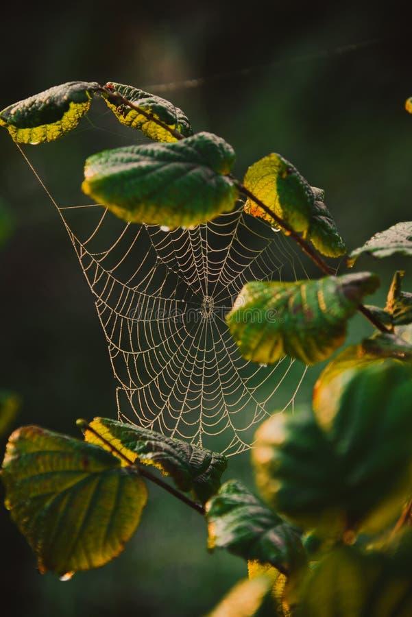 Ιστός cobweb σε κλαδί δέντρου στοκ φωτογραφίες με δικαίωμα ελεύθερης χρήσης