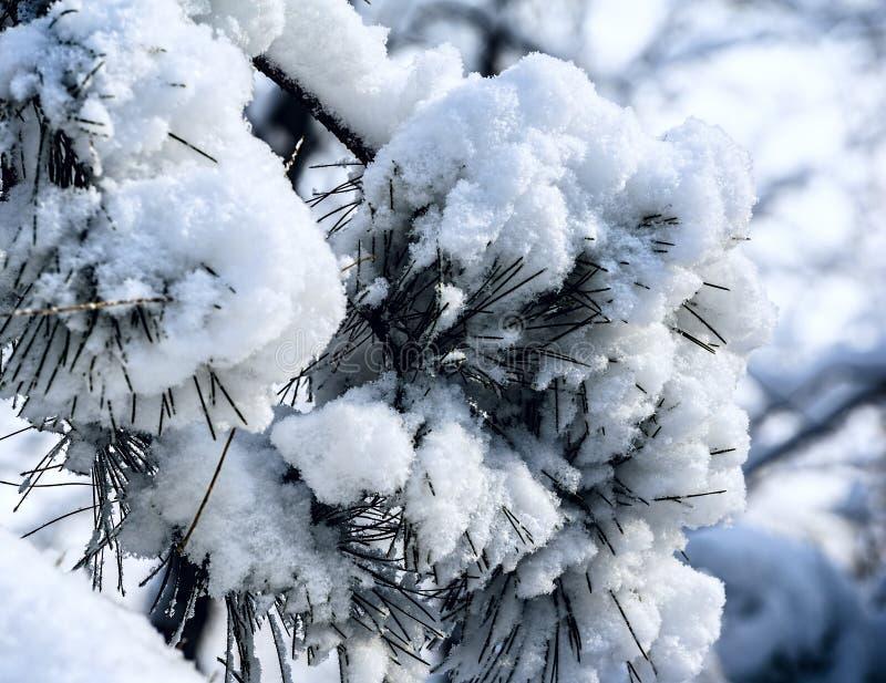 Ισχυρή χιονόπτωση στοκ φωτογραφία με δικαίωμα ελεύθερης χρήσης