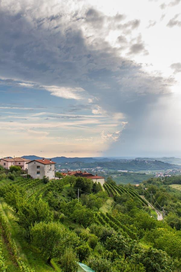 Ιταλικός αμπελώνας στοκ εικόνα με δικαίωμα ελεύθερης χρήσης