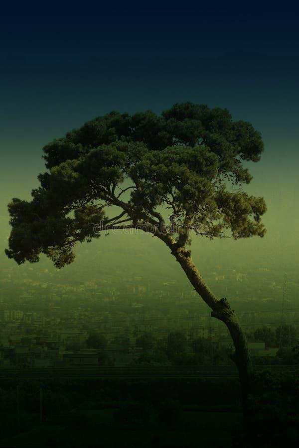 ιταλικό δέντρο πετρών πεύκω στοκ εικόνα με δικαίωμα ελεύθερης χρήσης