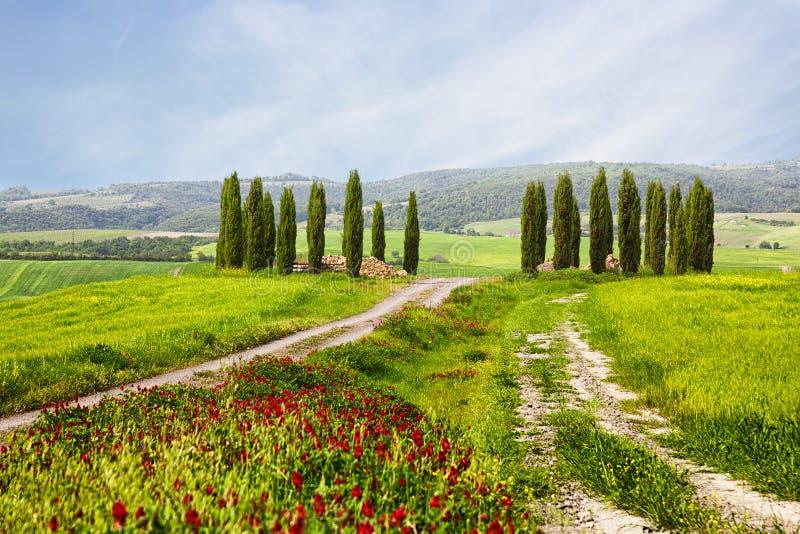 Ιταλικό θερινό τοπίο με τα κυπαρίσσια στοκ φωτογραφία με δικαίωμα ελεύθερης χρήσης