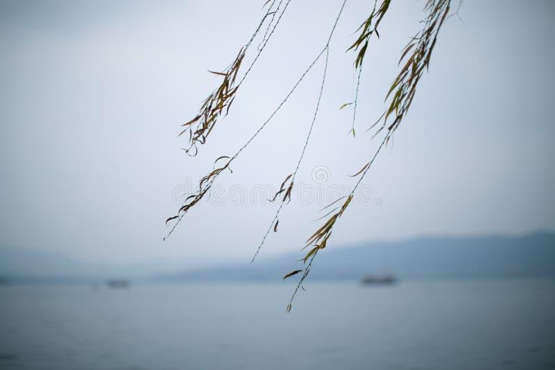 Ιτιά στη λίμνη Xihu στοκ φωτογραφία με δικαίωμα ελεύθερης χρήσης