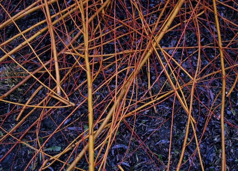 Ιτιά, λυγαριά που κόβεται από το pruner στον κήπο στοκ εικόνα με δικαίωμα ελεύθερης χρήσης