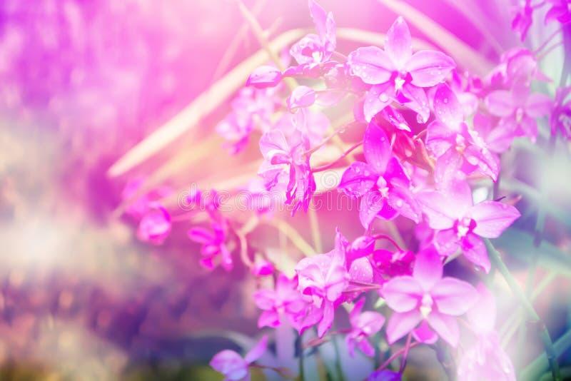 Ιώδεις ορχιδέες που ανθίζουν και πτώσεις δροσιάς, αφηρημένη φύση άνοιξη στοκ εικόνες