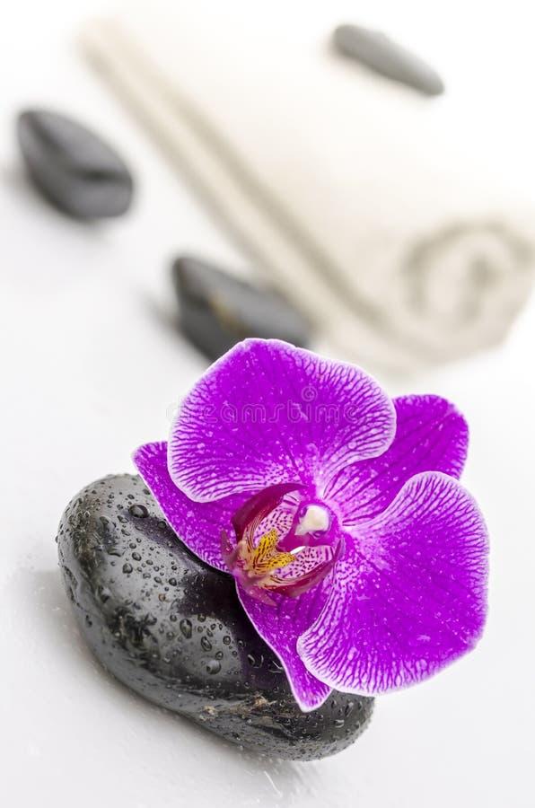 Ιώδες orchid λουλούδι σε μια πέτρα SPA στοκ φωτογραφίες