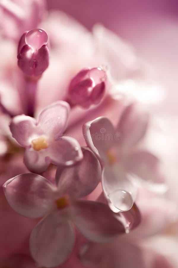 ιώδες watercolor λουλουδιών στοκ εικόνες