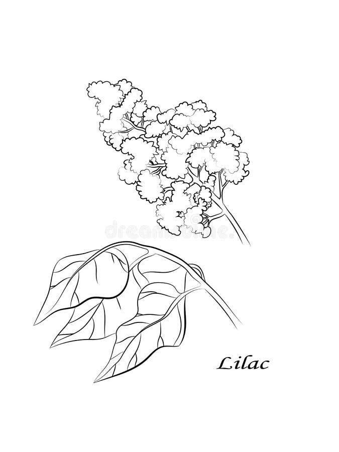 Ιώδης όμορφη γραφική διανυσματική απεικόνιση λουλουδιών και φύλλων διανυσματική απεικόνιση