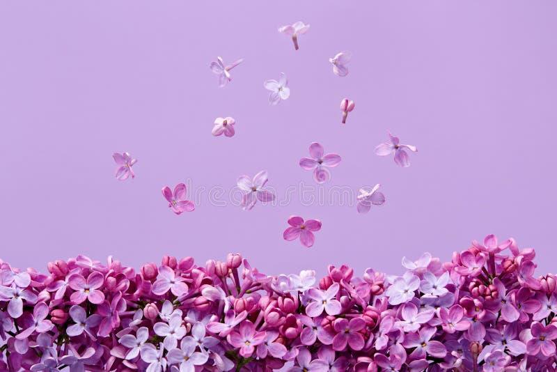 Ιώδη άνθη στο πορφυρό υπόβαθρο στοκ εικόνες με δικαίωμα ελεύθερης χρήσης
